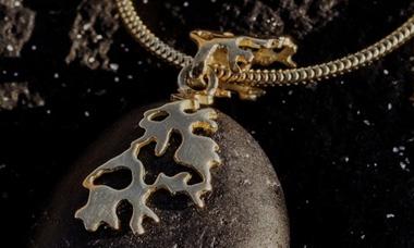 lichens-380x228